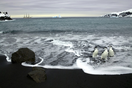 ReneKoster_photography-_ANTARCTICA penguins