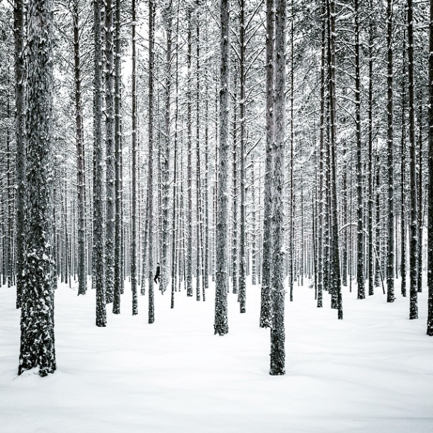 trees photograph Mikko Lagerstedt