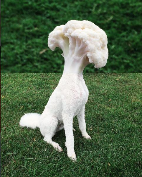 smcmennamy dog and cauliflower