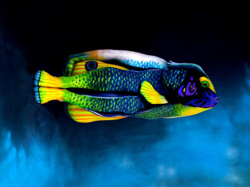 Fish bodypainting by johannes stoetter