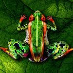 Amazingly realistic body-painted animals