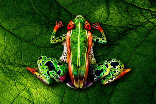 frog bodypainting by johannes stoetter