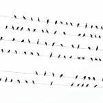 Photographs of Kawau birds in Tokyo