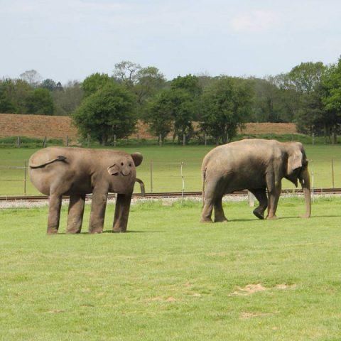 thingsihavedrawn-elephant2-setaprint